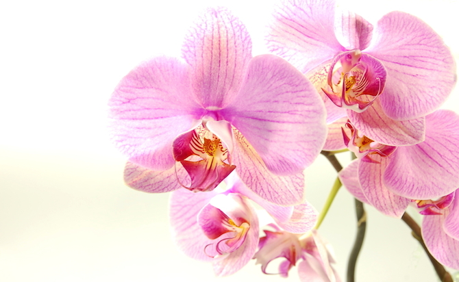Blumenlexikon